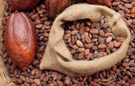 Cocoa, Gift taste of Mexico to the world